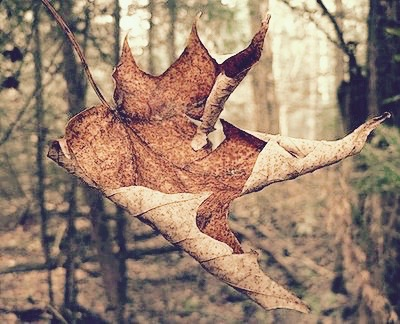 falling-leaf-1